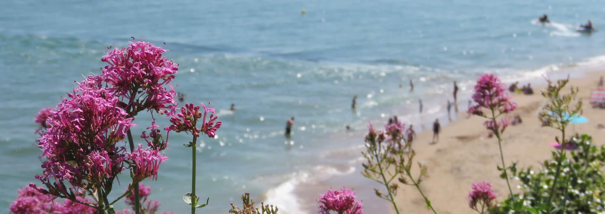 Flowers and sandy beach - Visit Ramsgate