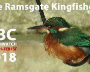 Kingfisher Ramsgate Harbour - BBC Winterwatch