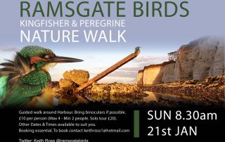 Guided Kingfisher walk Ramsgate Harbour