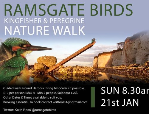 Guided Kingfisher Walk – Sun 21st Jan