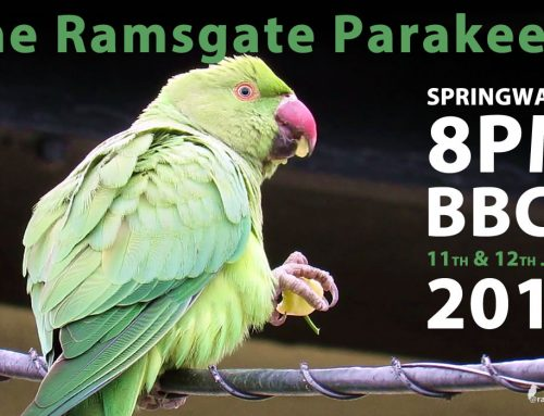 Ramsgate Parakeets on Springwatch