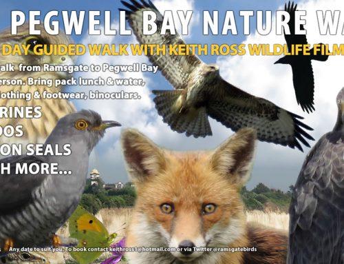 Ramsgate to Pegwell Nature Walk