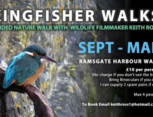 Guided Kingfisher Walks