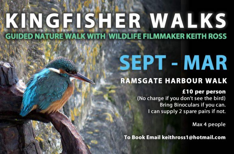 Guided Kingfisher Walks